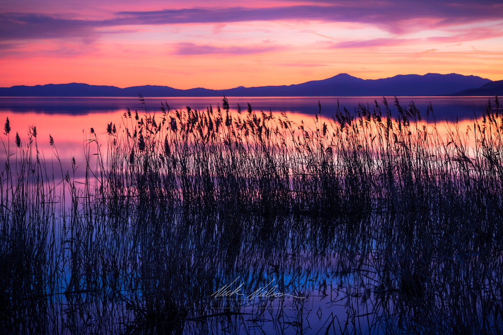 Lake Sunset Grasses